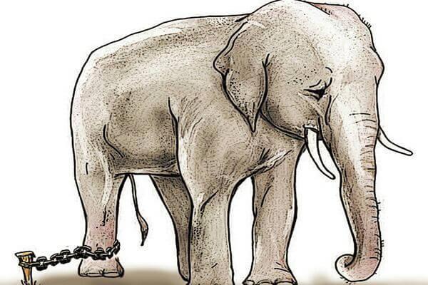 Cuento de Jorge Bucay: El elefante encadenado
