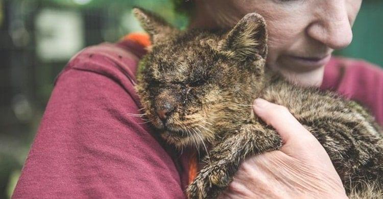 Beneficios de tener un gato para la depresión