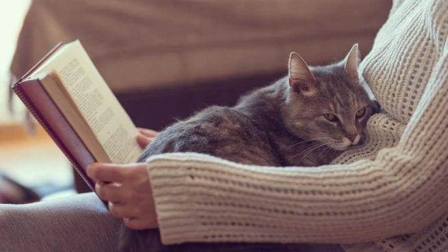 Acompañamiento de los gatos