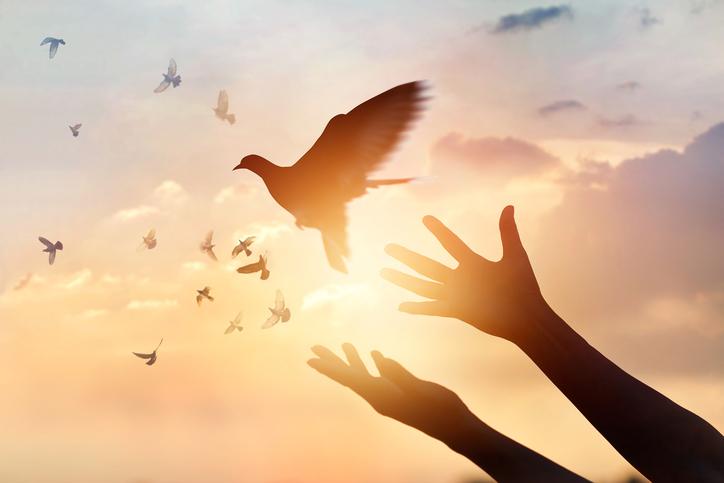 Paloma como símbolo de paz